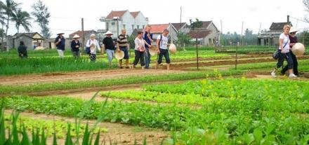 tra que vegetable village - Da Nang to Hoi An
