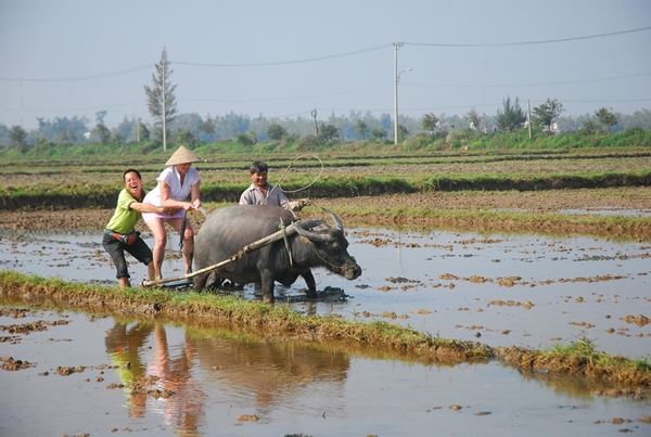 Farming Tour in Thanh Toan Village - thing to do in Hue